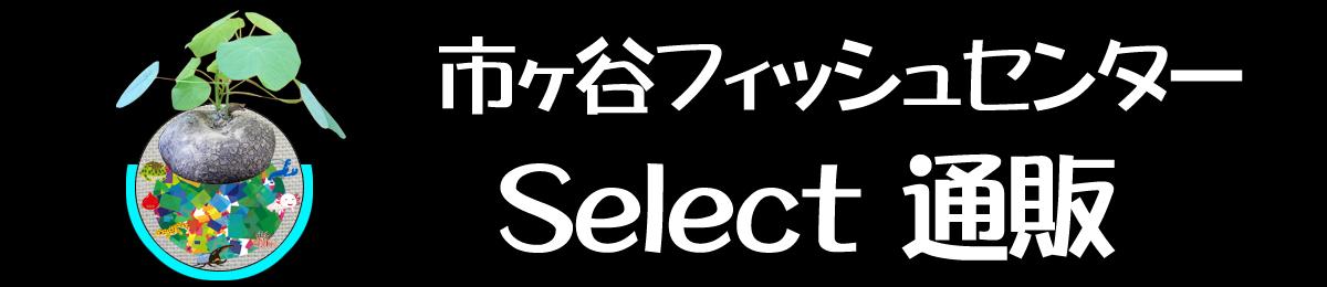 selectwebshop